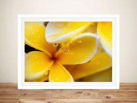 Yellow Frangipani Matt Day Framed Prints