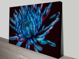 blue spider mum canvas print cheap online