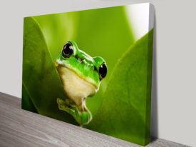 Curious Frog Animal Wall Art on Canvas