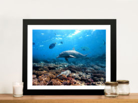 Dolphins Framed Wall Art