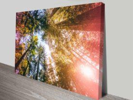california redwoods sun-rays and skys artwork photo print