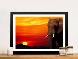Elephant Sunset Canvas Print & Home Wall Decor