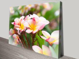 Frangipani-Floral-canvas-print_preview
