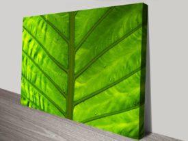 Green-focus-canvas-print_preview