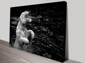 Roar of the Tiger Black and White Canvas Print