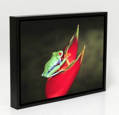 Floating Black Frame Canvas Print Australia