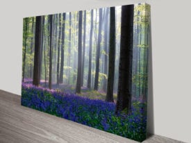 Bluebells-Forest-Canvas-Wall-Pictures