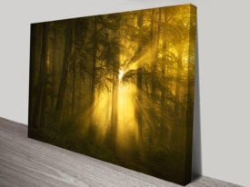 Morning in Forest Photographic Canvas Wall Art