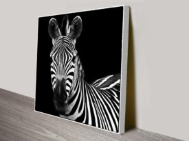 Black and White Zebra Square Canvas Wall Art Print