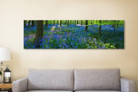 Buy Bluebell Wood Panoramic Art Gift Ideas