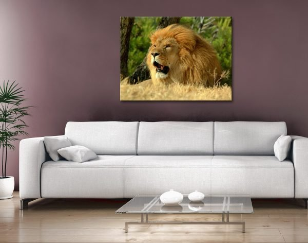 The Lion Photo Canvas Wall Art