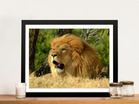 Lion Framed Wall Art Noosa