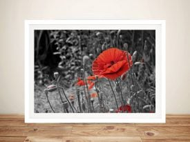 Red Poppy against Black & White Field Canvas Wall Art