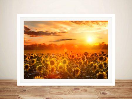 Sunflower fields sunset Framed Wall Art Picture