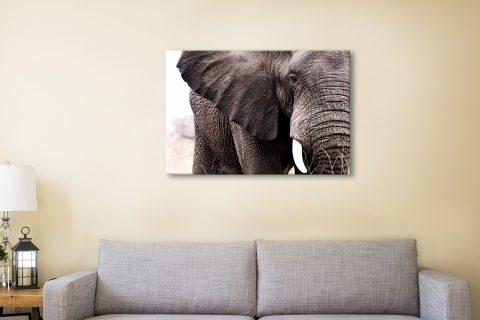Buy Beautiful Elephant Canvas Print