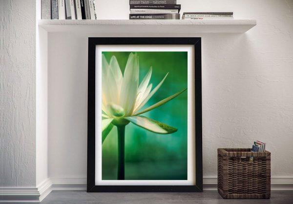 Affordable Framed Lotus Flower Print Cheap