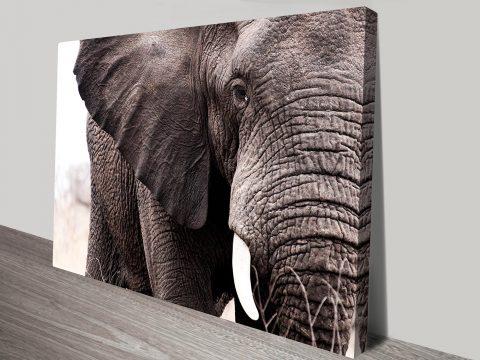 Elephant Photo Canvas Art Australia