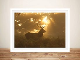 Stag in Morning Sunlight Framed Wall Art Decor