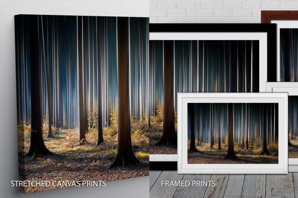 Tall Trees Quality Print