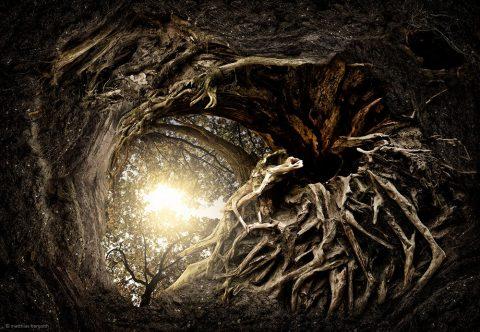 Tree Roots Great Gift Ideas Australia