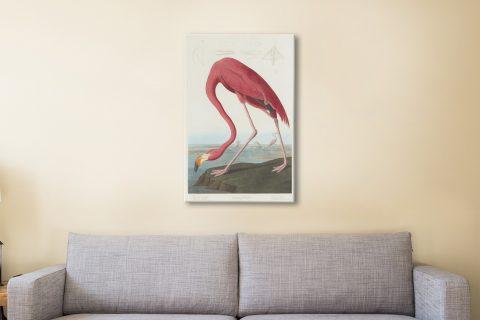 Flamingo Audubon Canvas Artwork