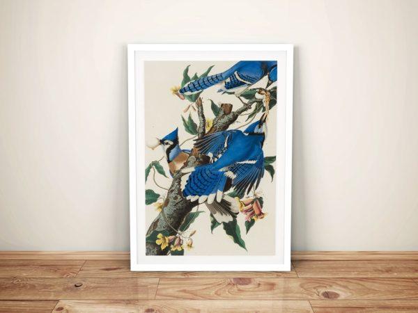 Blue Jay by John James Audubon Framed Wall Art