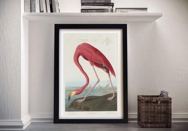 Flamingo Audubon Framed Wall Art