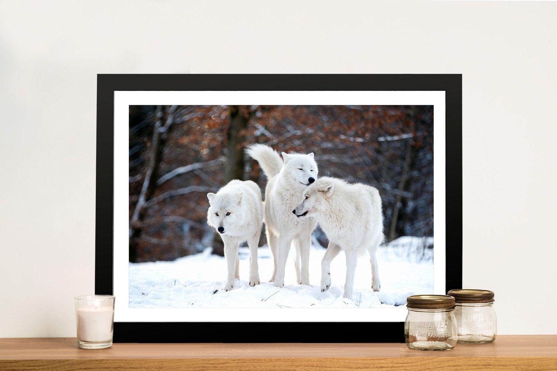 White Wolf Pack Framed Canvas Print Online