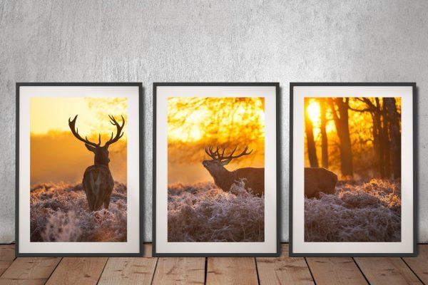 Buy Scenic Triptych Wall Art Cheap Online