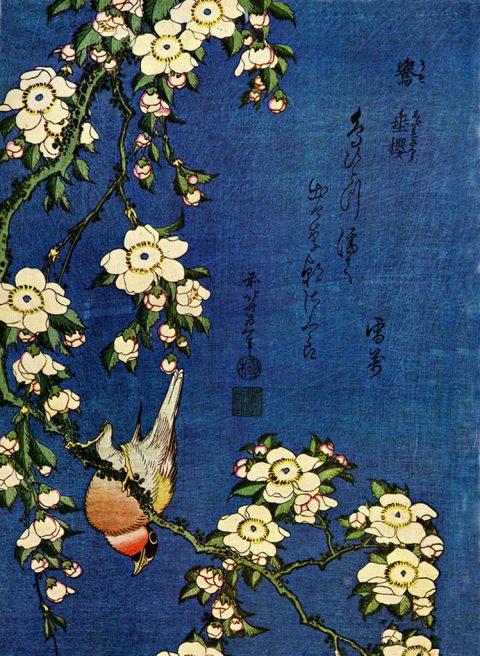 Hokusai Bullfinch and Drooping Cherry Canvas Art Print Sydney