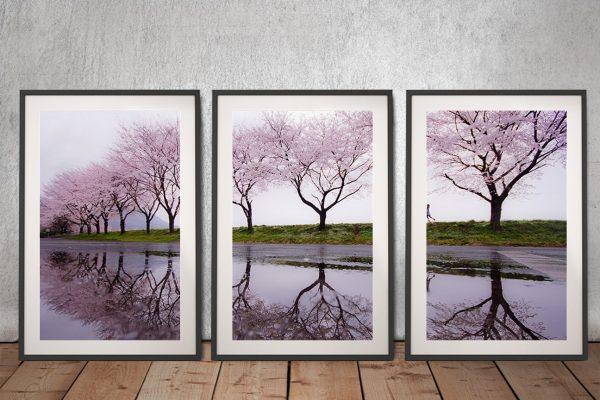 Framed Cherry Blossom 3-Piece Art Set AU