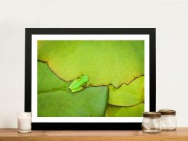 Frog on a Leaf Noel Buttler Wall Art