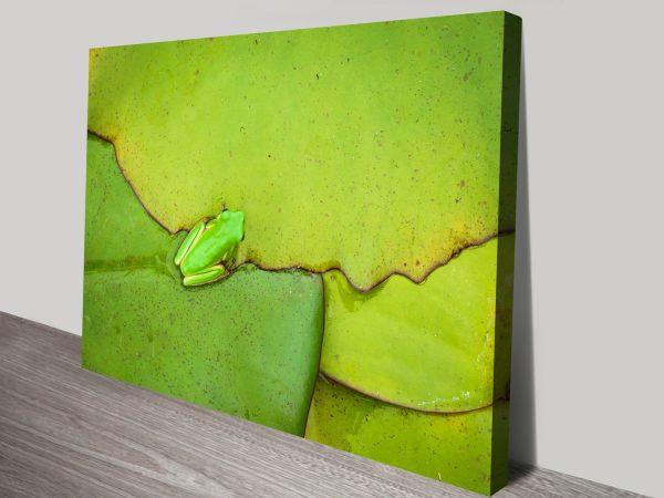 Buy Frog On A Leaf Australian Wall Art