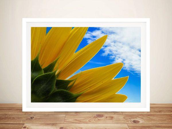 Sunflower Skies Noel Buttler Wall Art