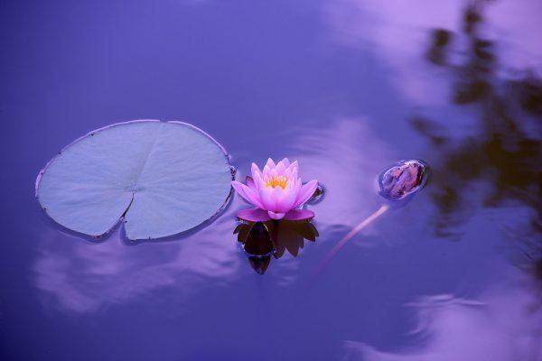 Relaxing Lotus Flower Wall Art