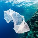 Why You Should Stop Using Plastic Bags