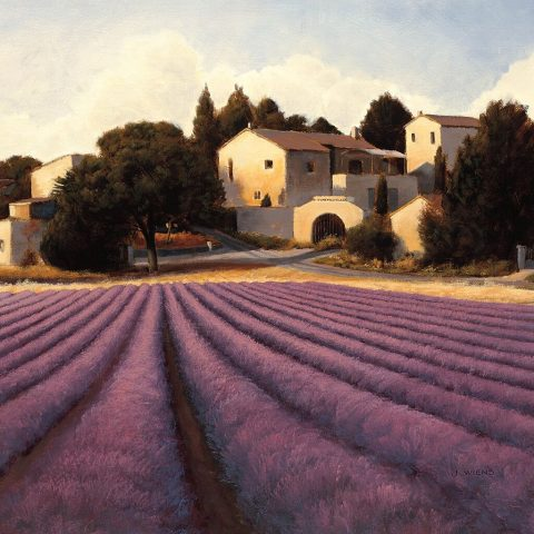 Buy Lavender Fields Stretched Canvas Print