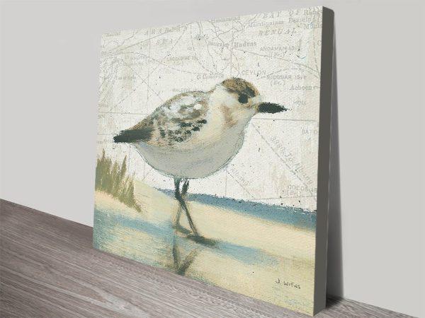 Beach Bird I Canvas Print By James Wiens
