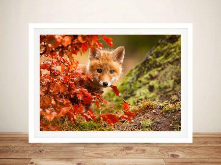 Fox By Robert Adamec Photo On Canvas