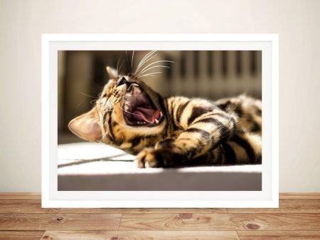 Catnap O'Clock Photos On Canvas