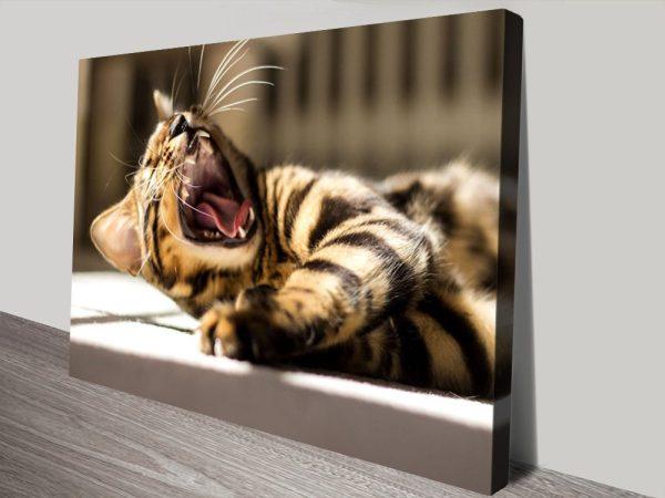 Animal Photography Cat Canvas Wall Art