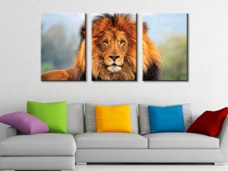 The Lion 3 Piece Canvas Set Triptych