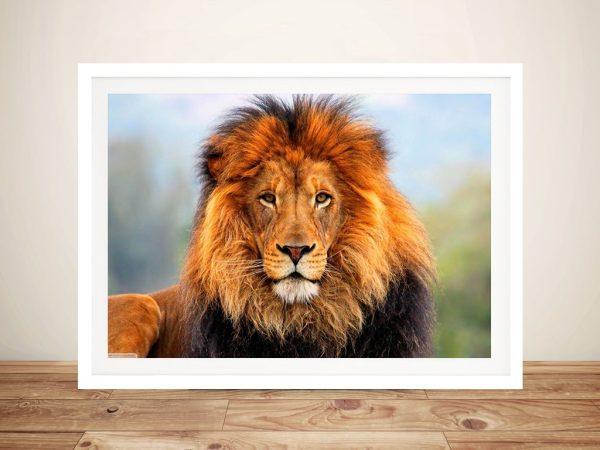 Lion Framed Art Print Sydney Australia