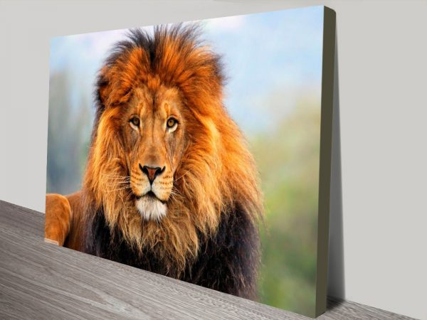 King of The Plains Photo On Canvas