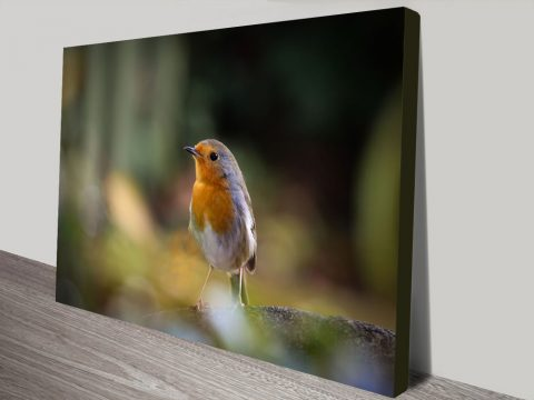 Stunning Robin Canvas Prints For Sale Online