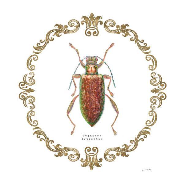 Adorning Coleoptera VI Large Canvas Prints Brisbane