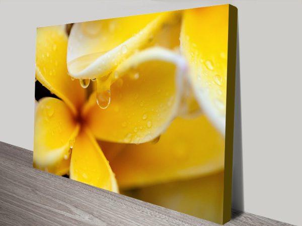 Yellow Frangipani Australian Photo Canvas Prints