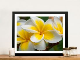 Yellow Frangipani II Matt Day Wall Art