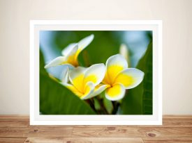 Yellow Frangipani III Matt Day Photography Prints