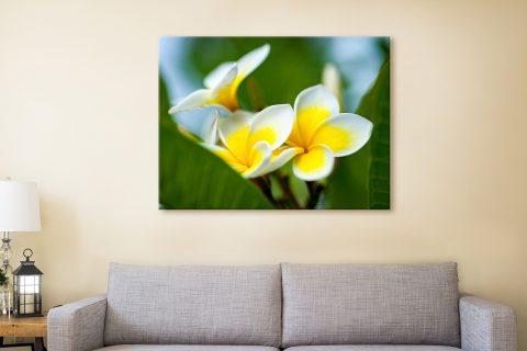 Yellow Frangipani 3 Stretched Canvas Artwork By Matt Day Australia